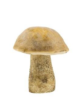 Biały grzyb z lasu liściastego na białym tle. naturalne jedzenie.