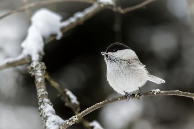 Biały i czarny ptak na gałęzi drzewa