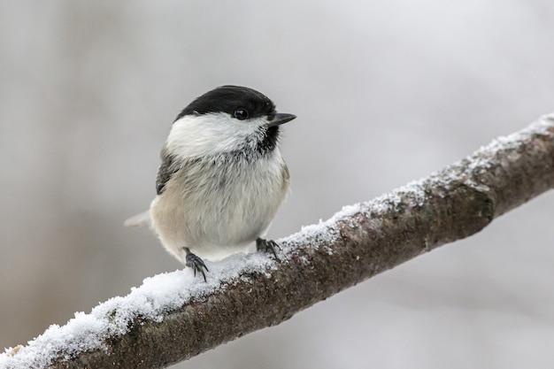 Biały i czarny ptak siedzący na gałęzi drzewa