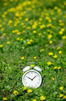 Biały klasyczny budzik z dzwoneczkami na zielonej łące z żółtymi kwiatami