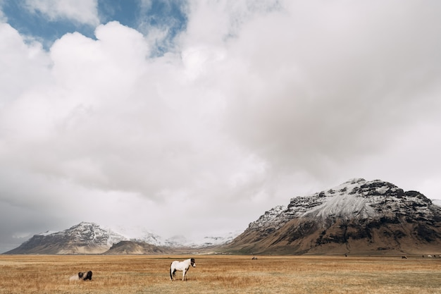 Biały koń na tle skalistych, ośnieżonych gór i białych chmur na błękitnym niebie