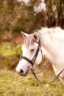 Biały koń stojący w naturze w stadninie koni