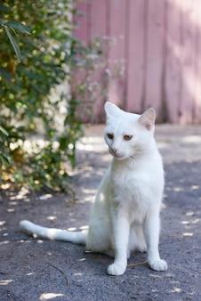 Biały kot gra na zewnątrz