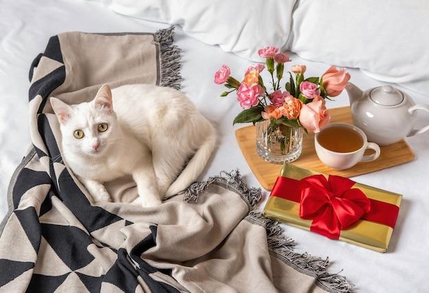Biały kot i pudełko prezentowe leżą w łóżku wcześnie rano. treść na walentynki.