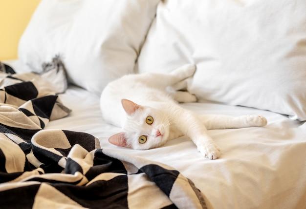 Biały kot krótkowłosy na łóżku
