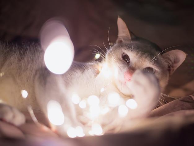 Biały kot leżący w łańcuchu. światła jarzeniowe. boże narodzenie tła.