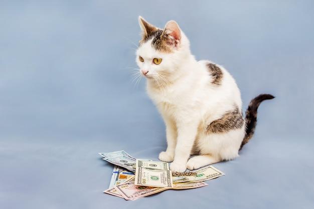 Biały kot na jasnoniebieskim tle siedzi w pobliżu paczki dolarów