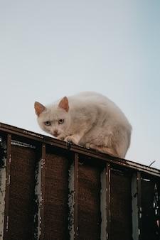 Biały kot na ścianie, patrząc do kamery