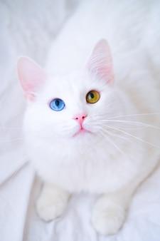 Biały kot o różnych kolorach oczu. angora turecka. van kociak z niebieskimi i zielonymi oczami patrząc w górę. urocze zwierzaki domowe, heterochromia