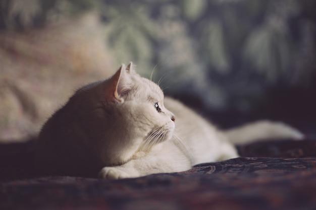 Biały kot odpoczywa na łóżku w sypialni. wygląd kota
