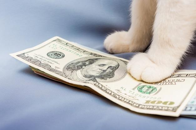 Biały kot położył łapę na paczce dolarów