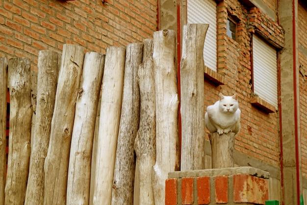 Biały kot siedzący na płocie z rustykalnego drewna przed murowanym domem
