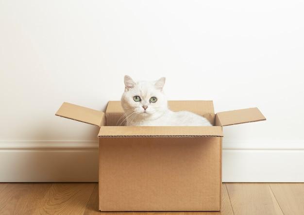 Biały kot siedzący w kartonowym pudle na tle białej ściany i drewnianej podłogi