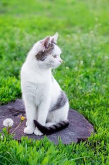 Biały kot siedzi na pniu wśród zielonej trawy