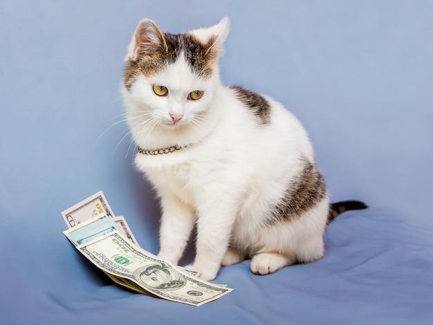 Biały kot siedzi obok paczki dolarów i patrzy w bok