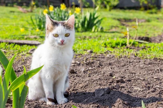 Biały kot siedzi w ogrodzie w pobliżu kwiatów w słoneczną pogodę