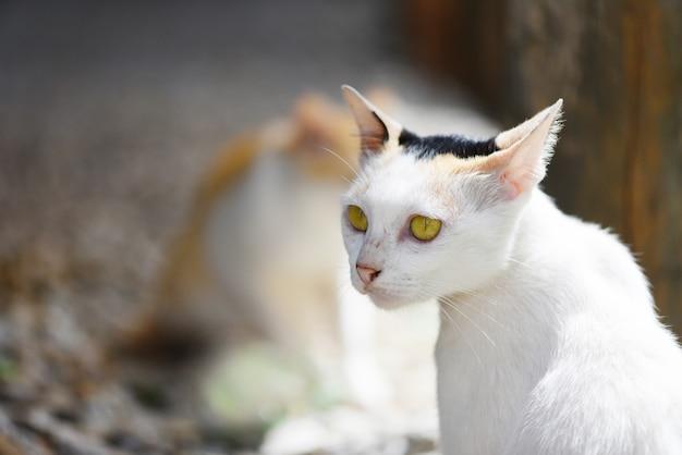 Biały kot siedzi z żółtymi oczami