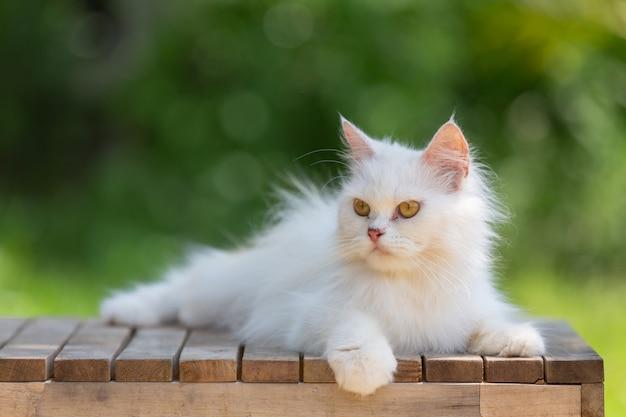 Biały kot w ogrodzie