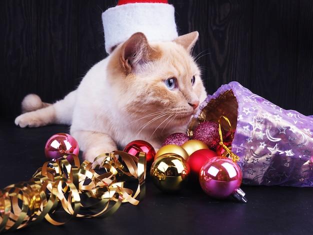 Biały kot w świątecznej czapce, zabawny kot, koncepcja bożego narodzenia.