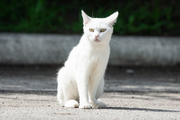Biały kot w trawie