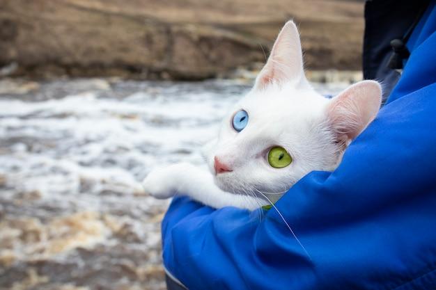 Biały kot z zielonymi i niebieskimi oczami na rękę człowieka w niebieskiej kurtce na powierzchni płynącej rzeki.