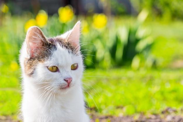 Biały kot zbliżenie na kwiaty w ogrodzie przy słonecznej pogodzie