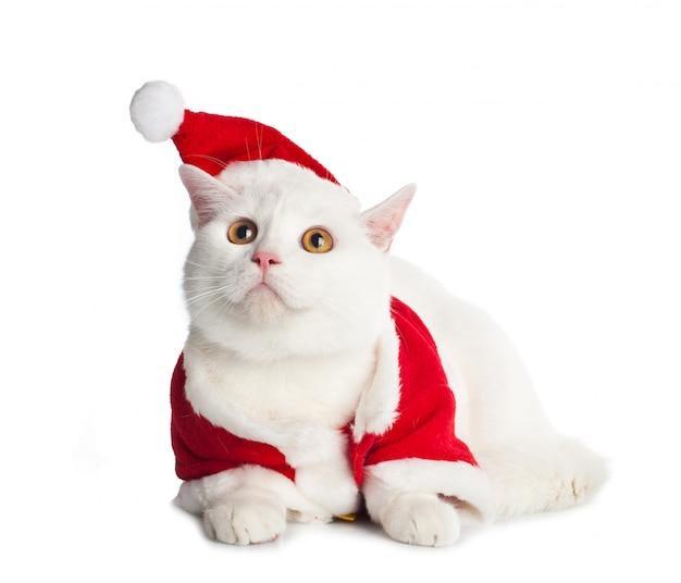 Biały kot