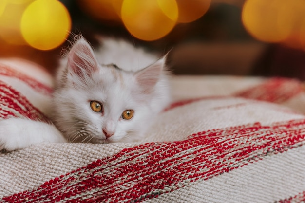 Biały kotek bawi się na łóżku