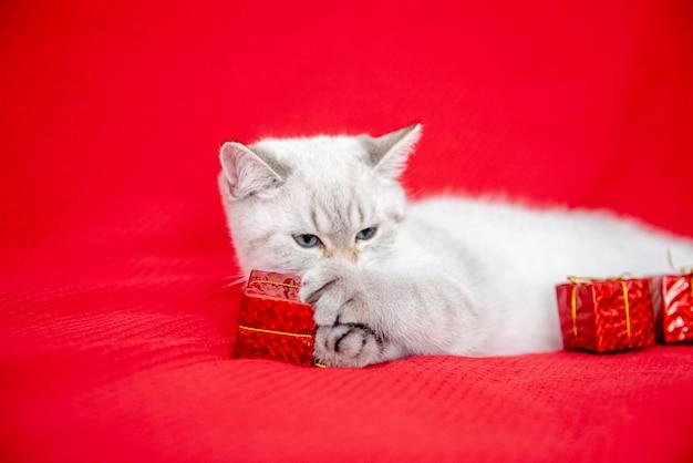 Biały kotek bawi się pudełkiem na białym tle na czerwonym tle koncepcja bożego narodzenia i nowego roku