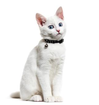 Biały kotek kot rasy mieszanej w dzwonkowym kołnierzu