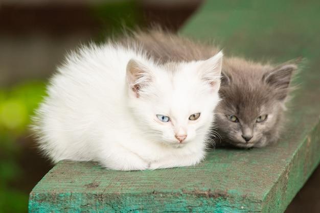 Biały kotek o różnych oczach