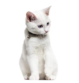 Biały kotek rasy mieszanej noszący dzwonkowy kołnierz i spoglądający w dół