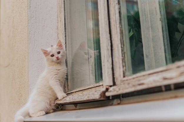Biały kotek siedzi w oknie na zewnątrz