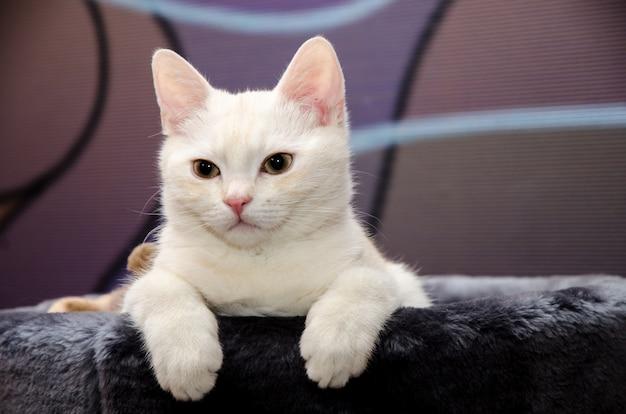 Biały kotek siedzi w swoim domu i wygląda