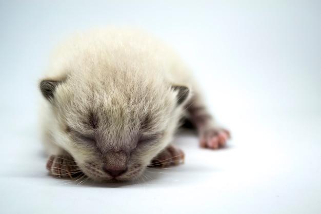 Biały kotek śpi na białym tle