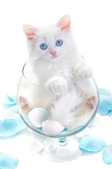 Biały kotek w kieliszku do wina