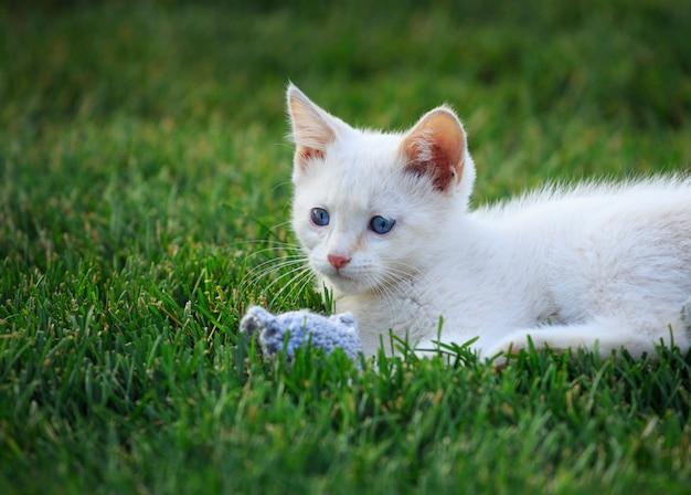 Biały kotek z zabawkową myszą