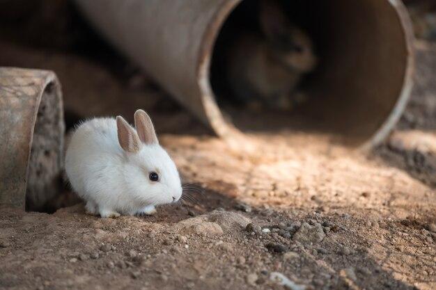 Biały króliczek z betonowej tuby domowej