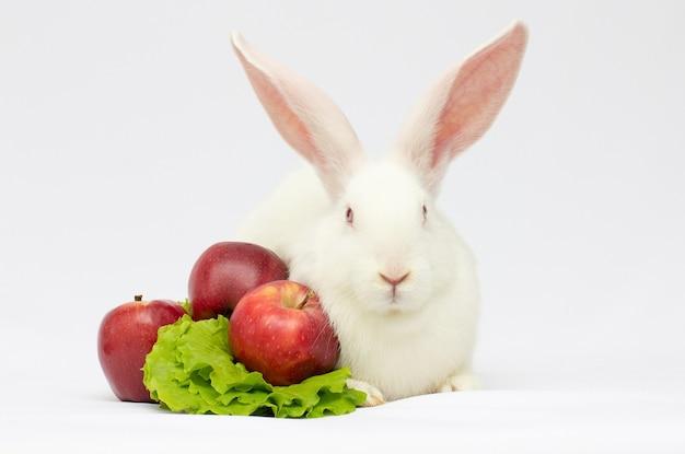 Biały królik siedzi blisko swojego jedzenia