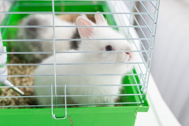 Biały królik w klatce