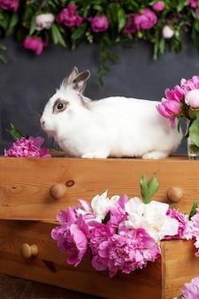 Biały królik z wiosennymi kwiatami. czas wielkanocy