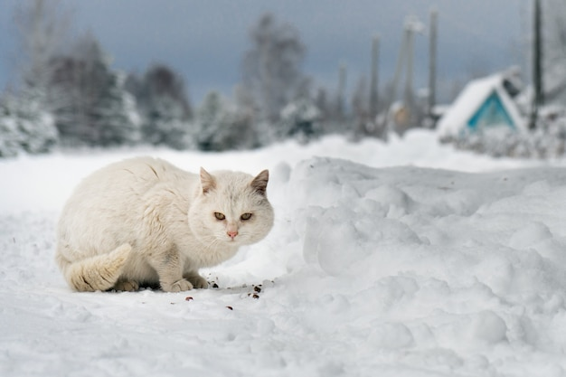 Biały kundel zjada kawałki suchej karmy na śniegu w mroźny zimowy dzień na rosyjskiej wiosce