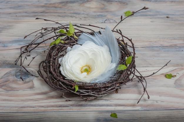 Biały kwiat jaskier w gnieździe brzozowych gałązek i niebieskich piór