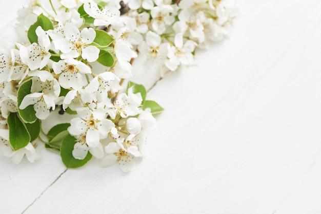 Biały kwiat morela. wiosna wielkanoc kwiaty kwitnienie wiśni. sakura biały kwiat. słoneczny dzień. wiosenne kwiaty. piękny sad. wiosna