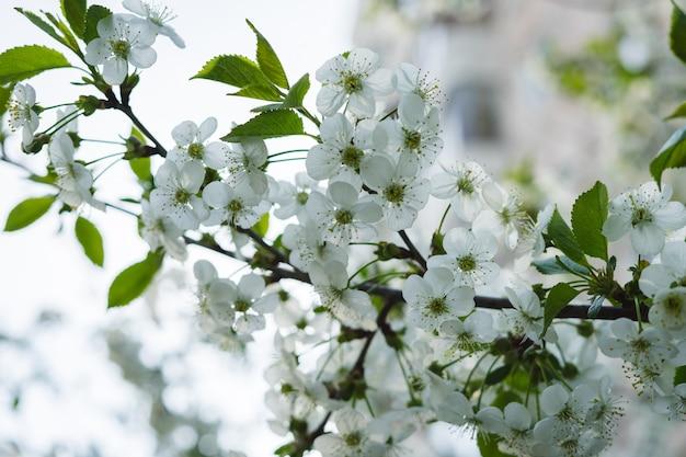 Biały kwiat na gałęzi.