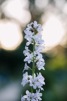 Biały kwiat płatkowy