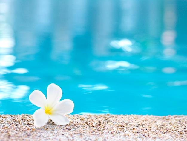 Biały kwiat plumeria spada na ziemię w pobliżu basenu.