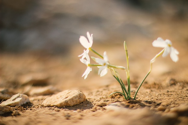 Biały kwiat rosnący na ziemi w ciągu dnia