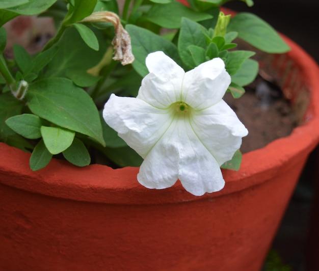 Biały kwiat z zielonym liściem w doniczce