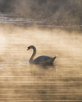 Biały łabędź na zbiorniku mgły